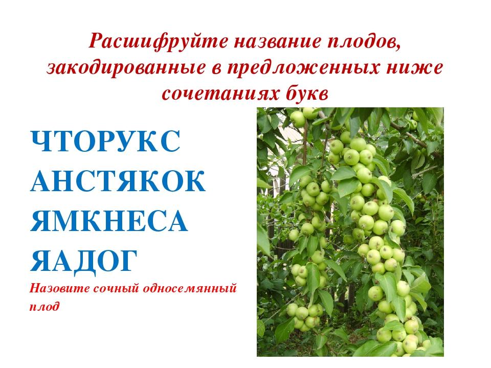 Расшифруйте название плодов, закодированные в предложенных ниже сочетаниях бу...