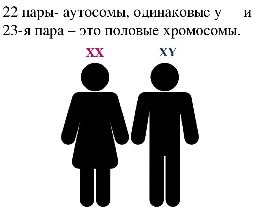 22 пары- аутосомы, одинаковые у ♂ и ♀ 23-я пара – это половые хромосомы. XX XY