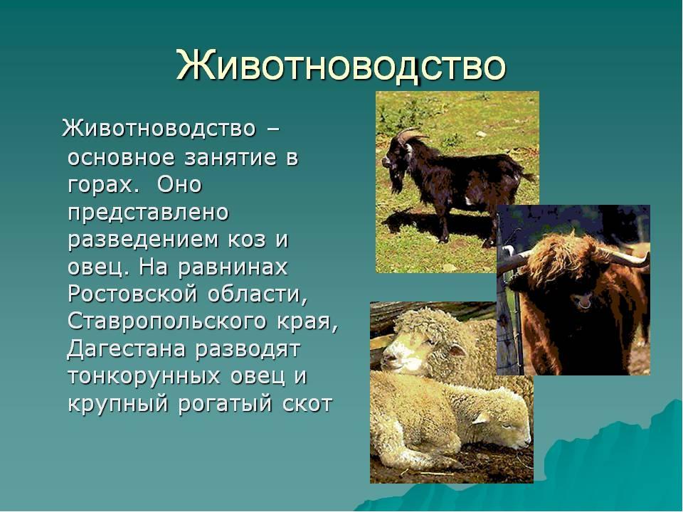 вовсе хотела животноводство знасение отрасли в народном хозяйстве пока