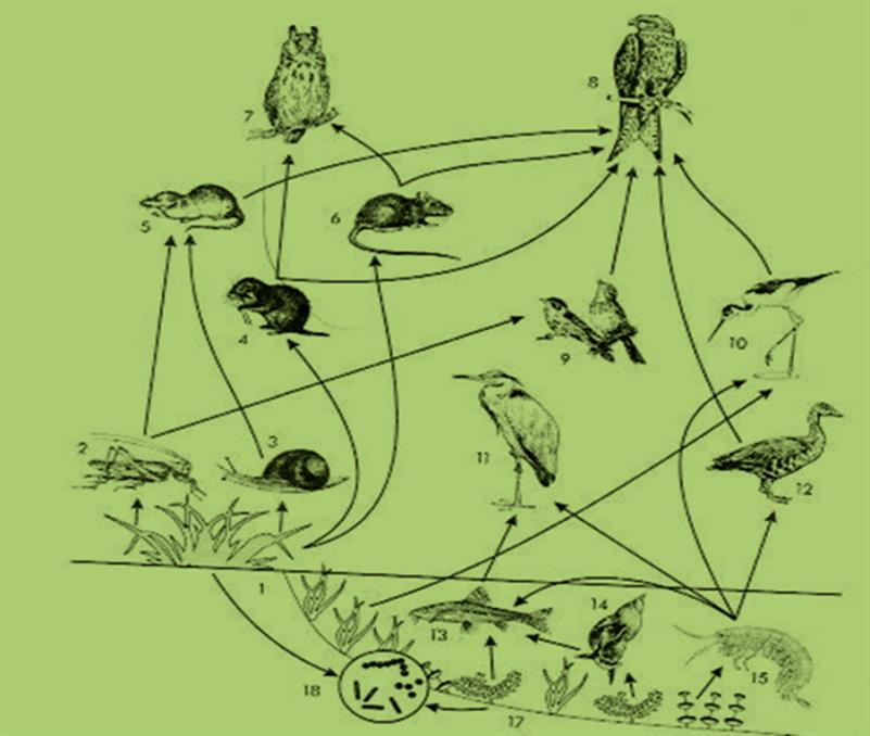 Аквариум как девушка модель экосистемы практическая работа 11 класс беляев пожелать удачи на работе девушке