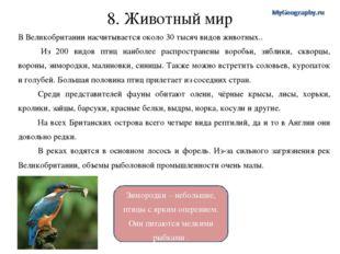 Зимородки – небольшие, птицы с ярким оперением. Они питаются мелкими рыбками