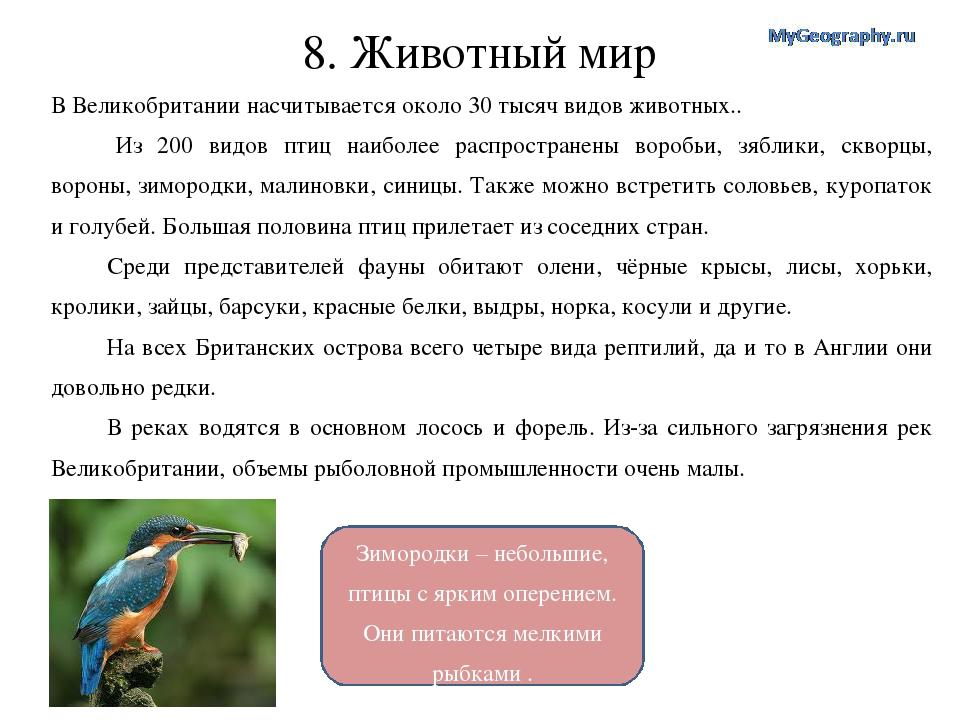 Зимородки – небольшие, птицы с ярким оперением. Они питаются мелкими рыбками...