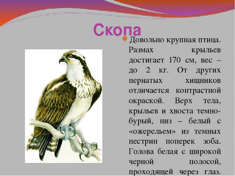 птицы нижегородской области занесенные в красную книгу оформлено