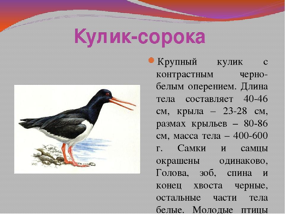 птицы нижегородской области занесенные в красную книгу обладает